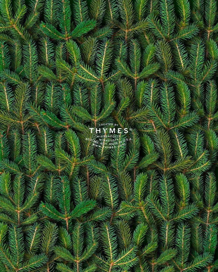 thymes-2014-holiday-catalog-back